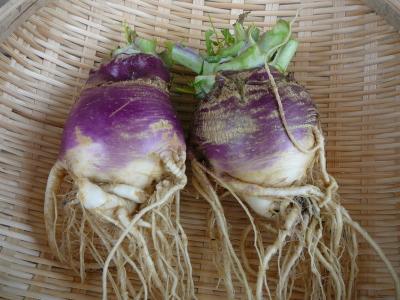 有機農法で栽培したルタバカ