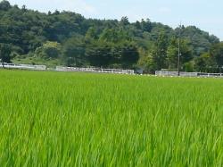 無農薬・無化学肥料農業