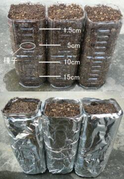 種子の最適な深さ実験で用意するもの