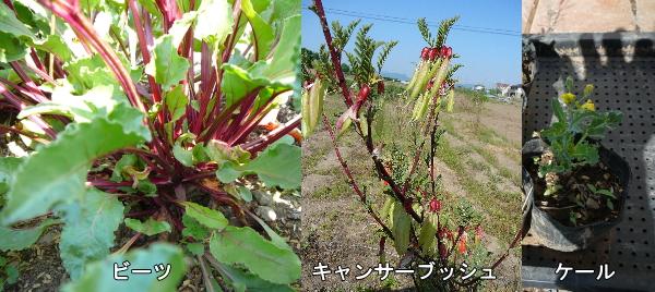 異常気象に困惑する植物たち