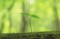 植物の発芽力を調べる