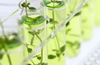 化成肥料の影響を調べる