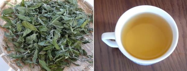 菊芋葉(新芽)のお茶