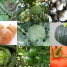 農業を行う上での基礎知識