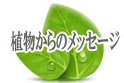 植物からのメッセージ