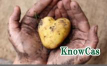 無農薬野菜,健康野菜を育てる農家ノウカス