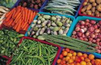 その他野菜に発生する病気・害虫
