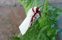 その他病気・害虫の被害と対策