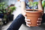 ハーブ・野菜の種苗の販売