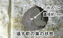 ハスモンヨトウの巣