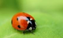益虫-種のバランスの取れた畑